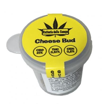 Infiorescenze femminili Cheese Bud La fattoria della Canapa 1 gr