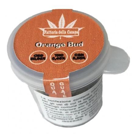 Infiorescenze femminili Orange Bud La fattoria della Canapa 1 gr