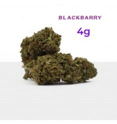 4 g Cannabis Light Blackberry Oasis Hemp